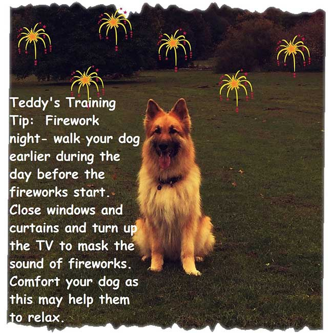 dog training tip firework night