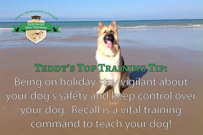 Dog Training Qualifications Uk