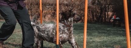 Dog-Agility-22-1024x683