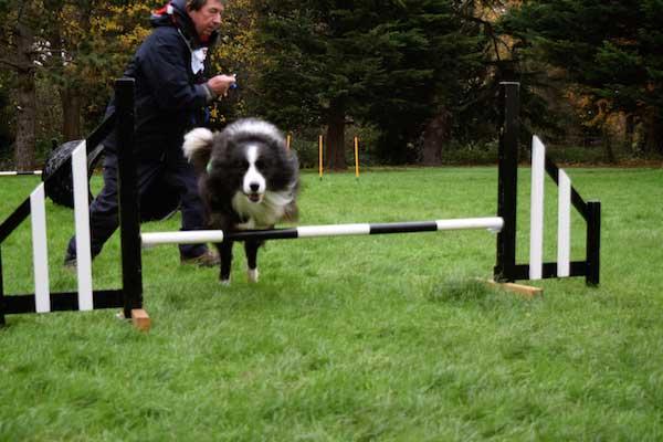 Dog Agility Crayford Manor house