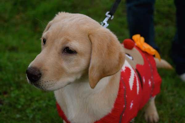 Teddy's trekkers Christmas walk