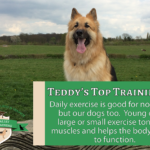 Dog Training Tip